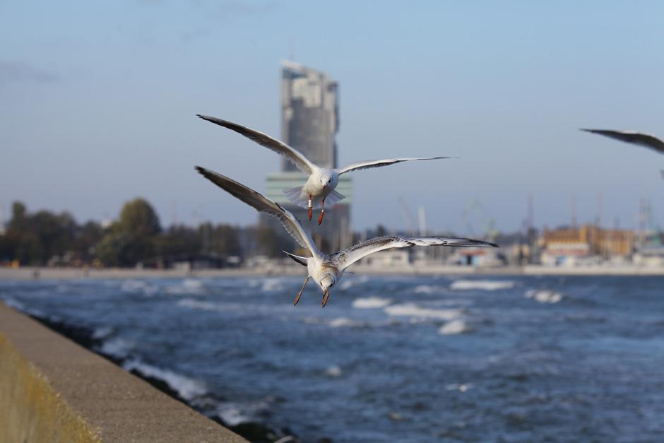 ptaki-940-4