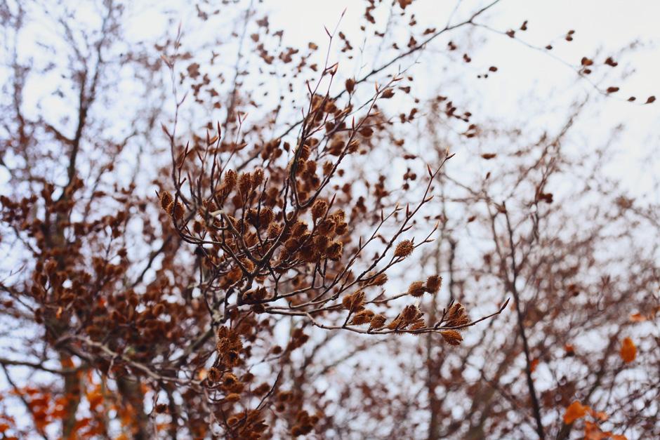 park-oliwski-jesienia-fotografia-blog-innooka-1