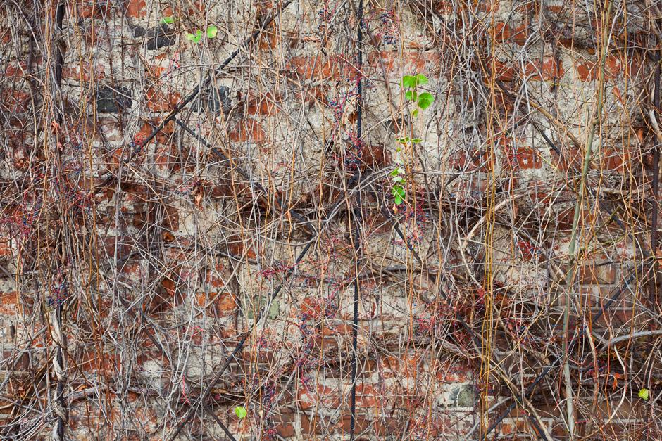 park-oliwski-jesienia-fotografia-blog-innooka-10