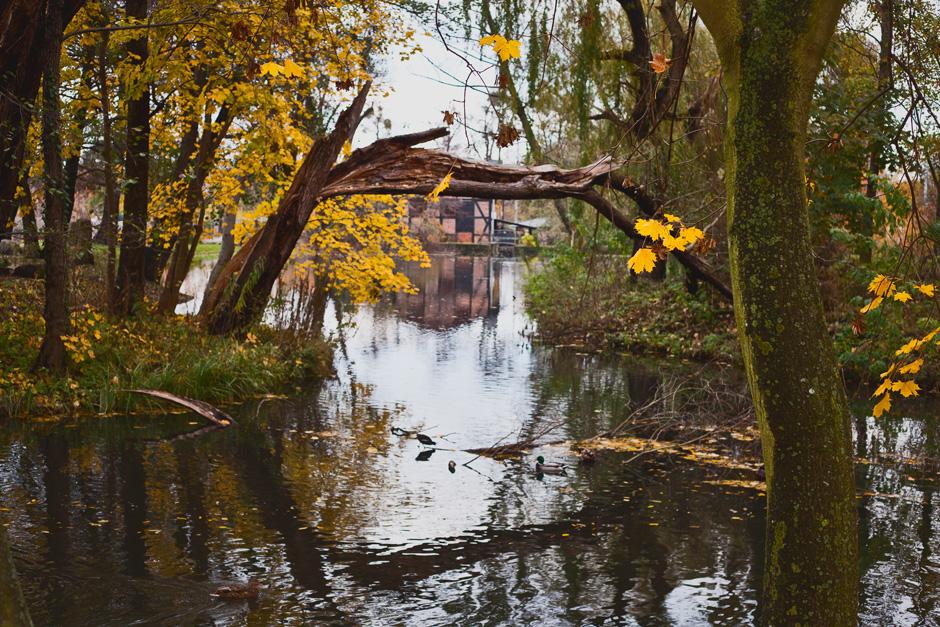 park-oliwski-jesienia-fotografia-blog-innooka-3