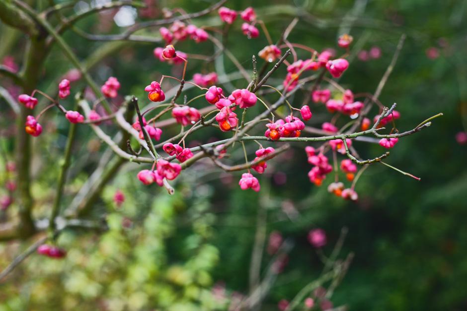 park-oliwski-jesienia-fotografia-blog-innooka-4