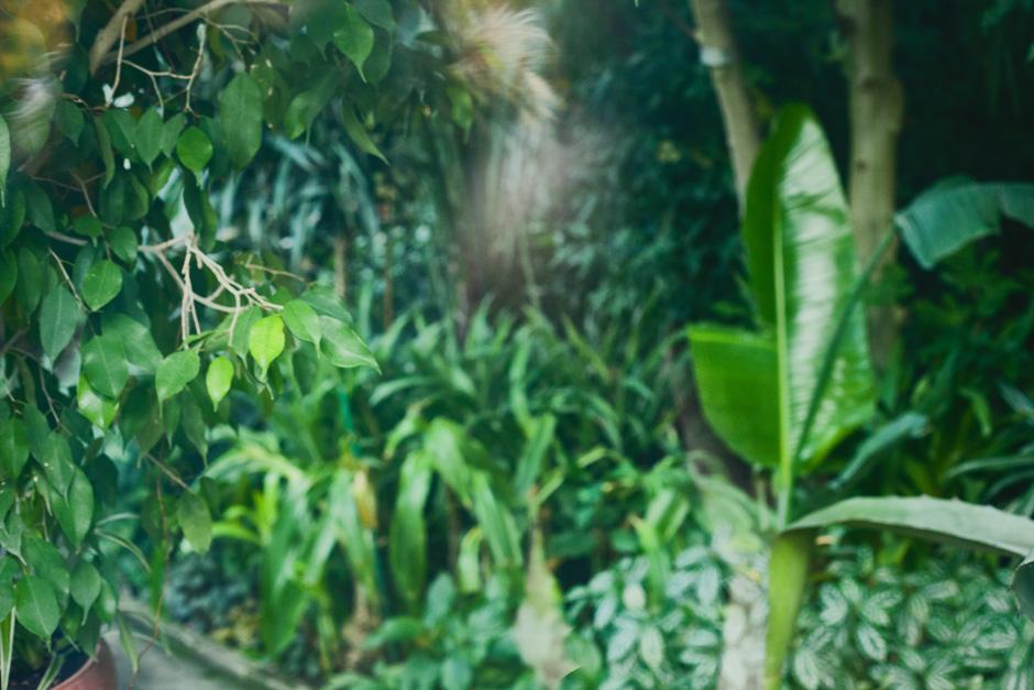 park-oliwski-jesienia-fotografia-blog-innooka-5