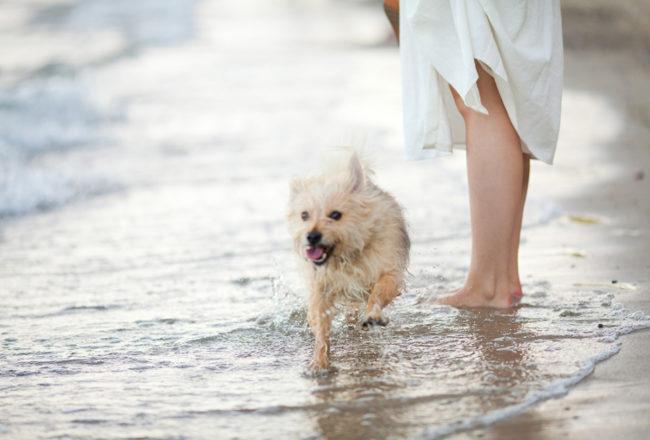 OOTD: brzegiem morza... / kremowa bawełniana sukienka Zara