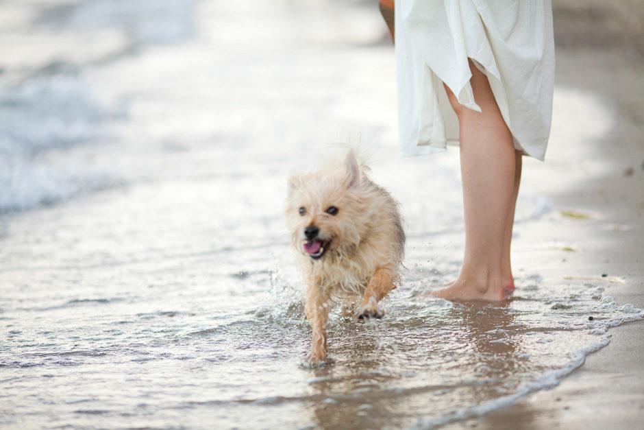 kremowa sukienka z zary pies plaża