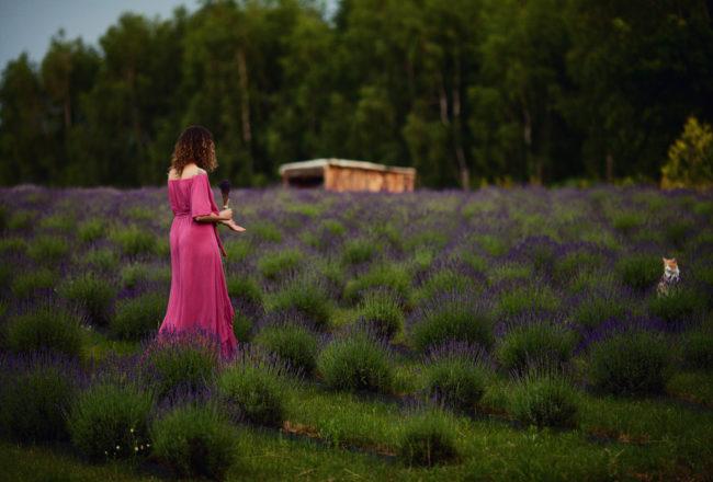 Na lawendowym polu