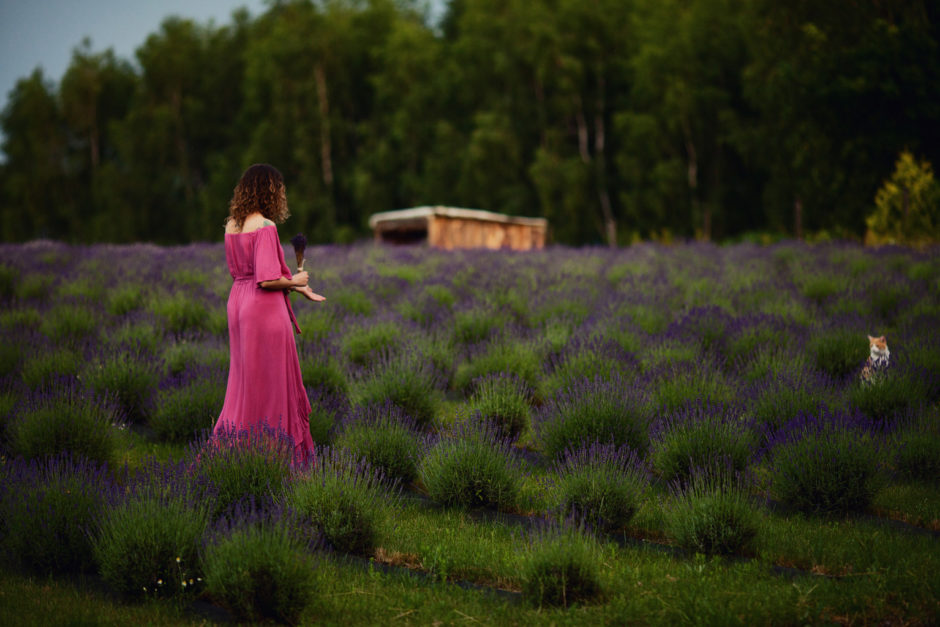 kobieta w sukience na polu lawendy